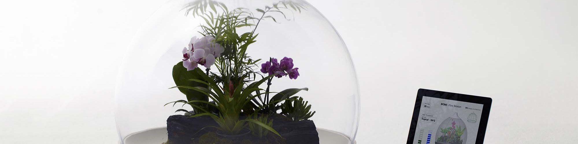 Biome flora terrarium door Samuel Wilkinson