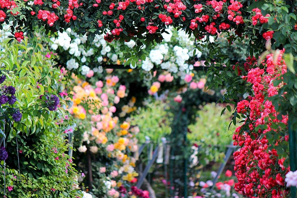 planten groei tuin