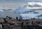 antarctica pinquins
