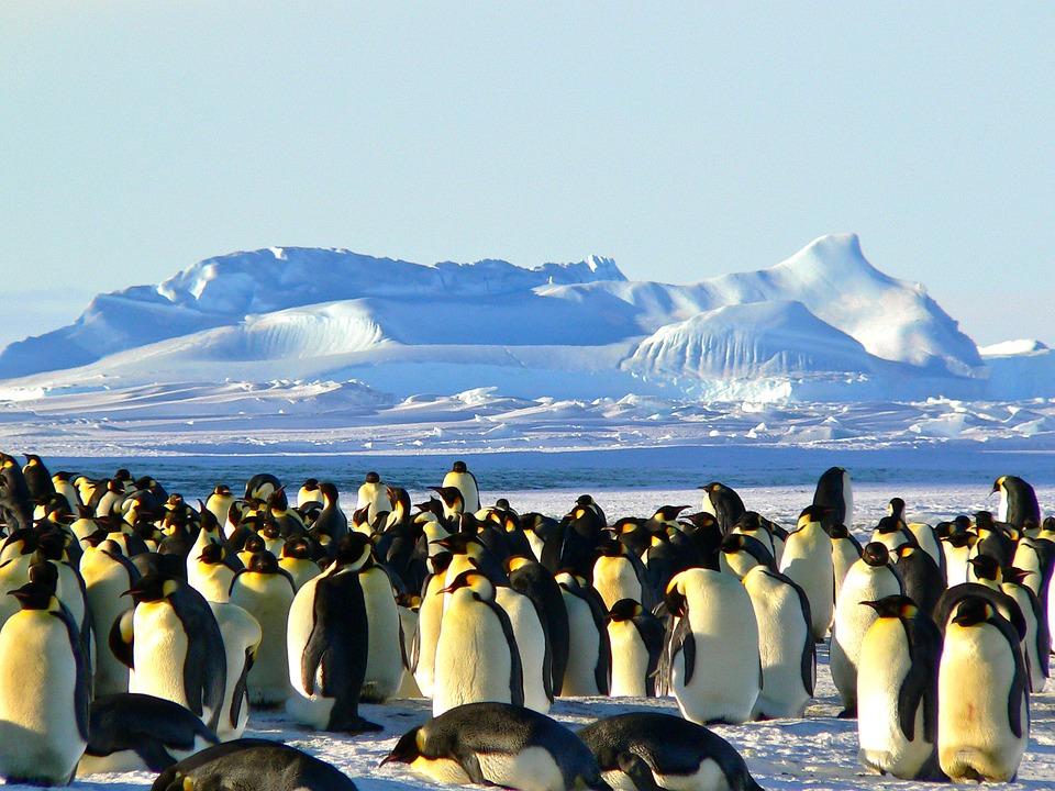 pinquins op antarctica