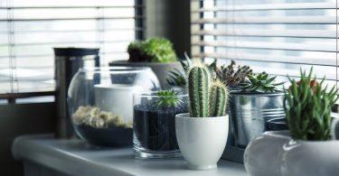 planten bij het raam