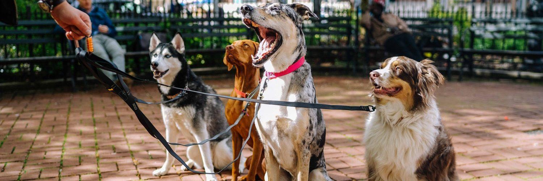 4 honden aan de lijn