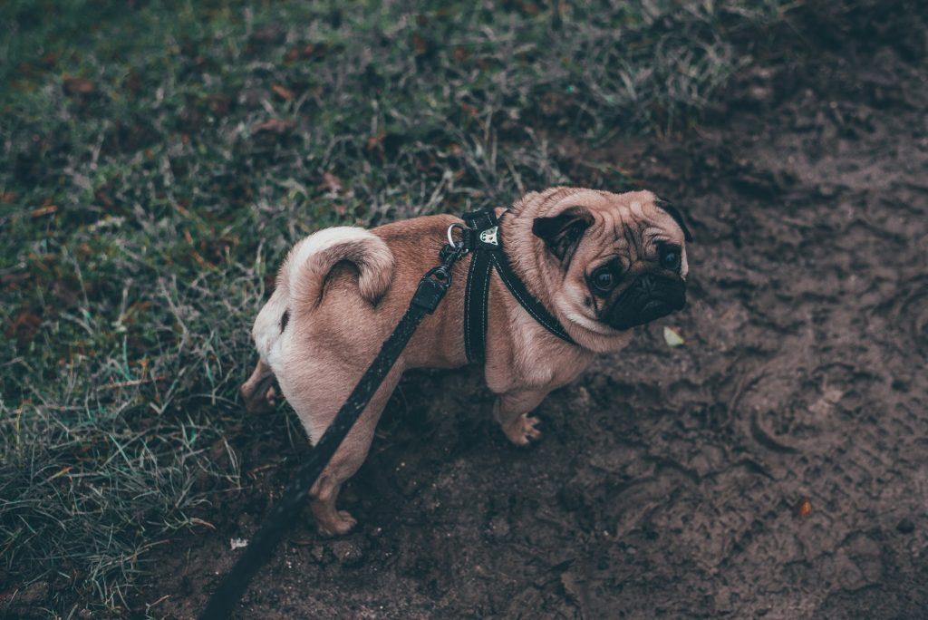 hond-uitlaten
