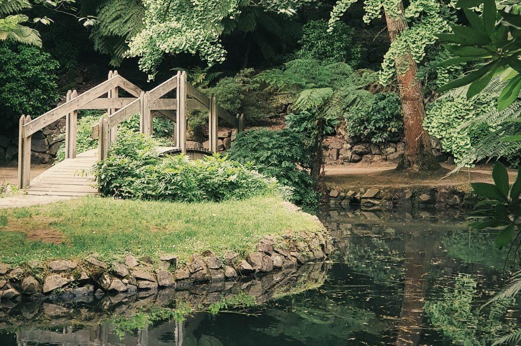 tuin-met-water