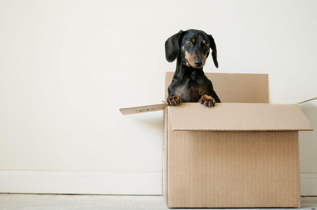 verhuis-doos-hond-verhuizen