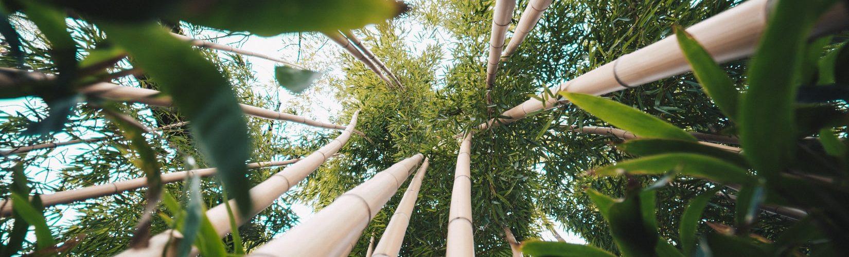 bamboe-natuur
