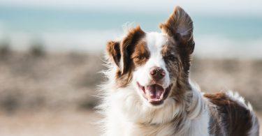 hond-blij