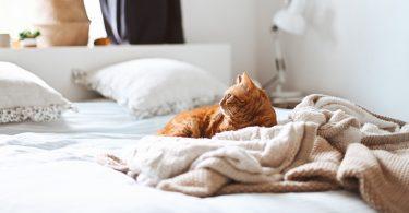 bed-kat