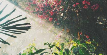 planten-bloemen-tuin