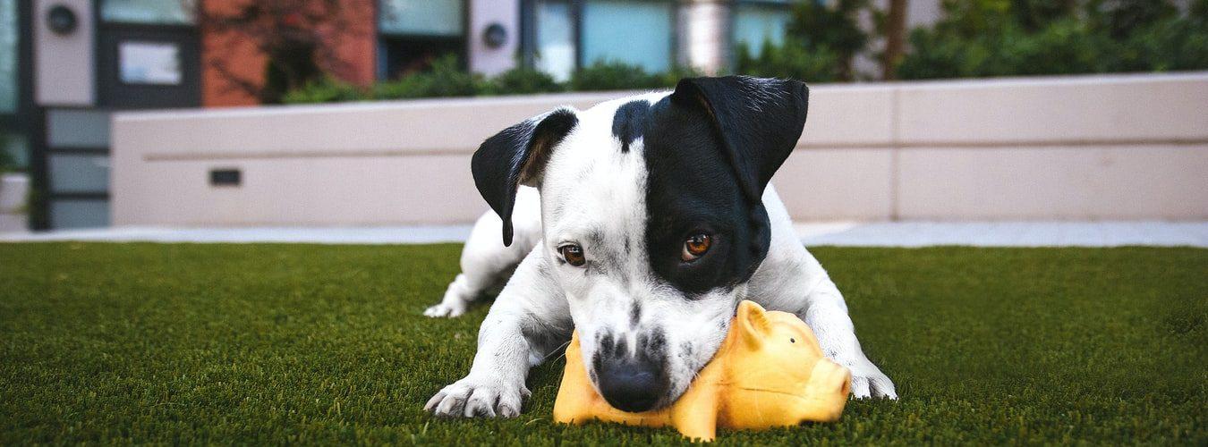 hond-speeltje