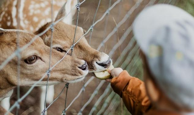 dierentuin-herten-kind