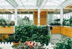 groene-muur-planten