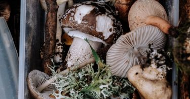 paddenstoelen-verzameling